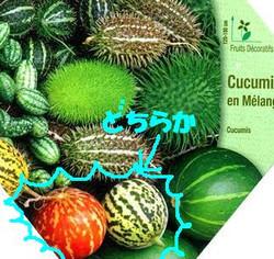 Cucumis_seed