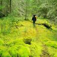 ソルトスプリングの森