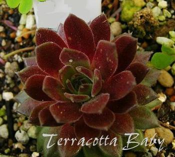 Terracotta Baby